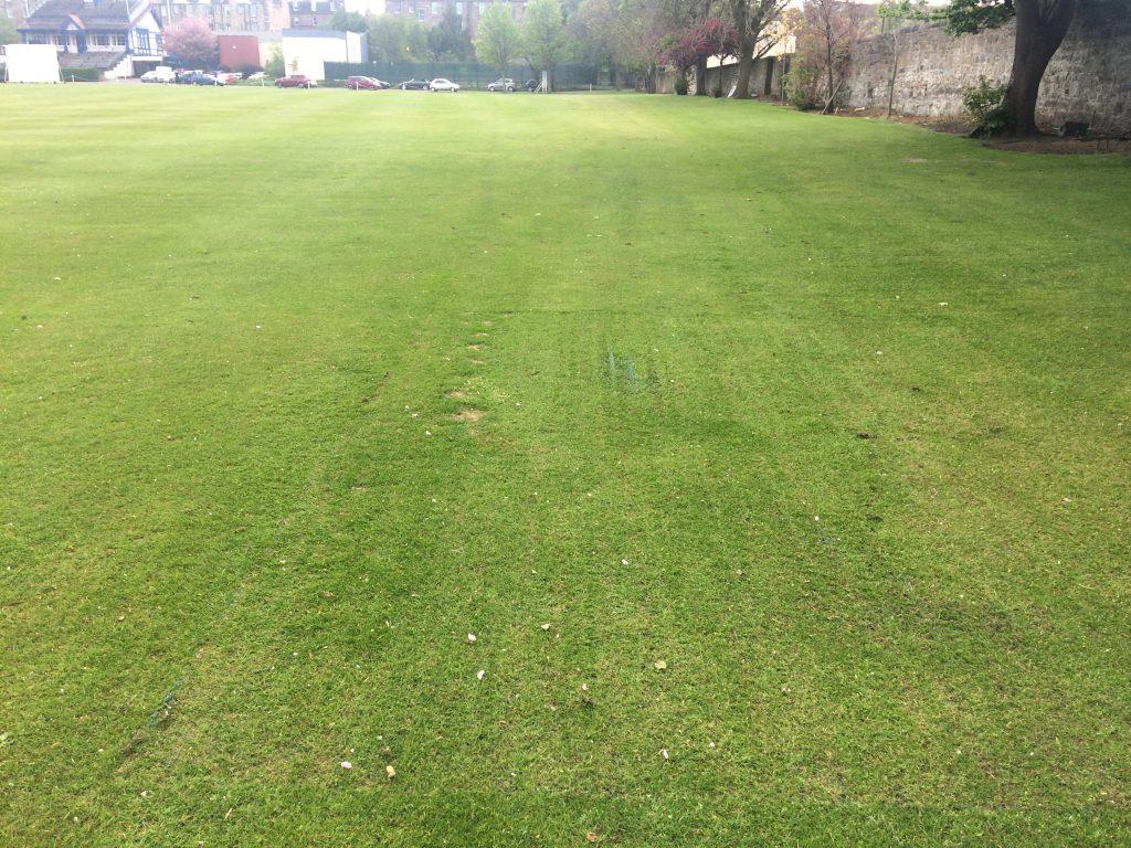 TurfMesh Installation Grange Sports Club - Grass Growth After the installation
