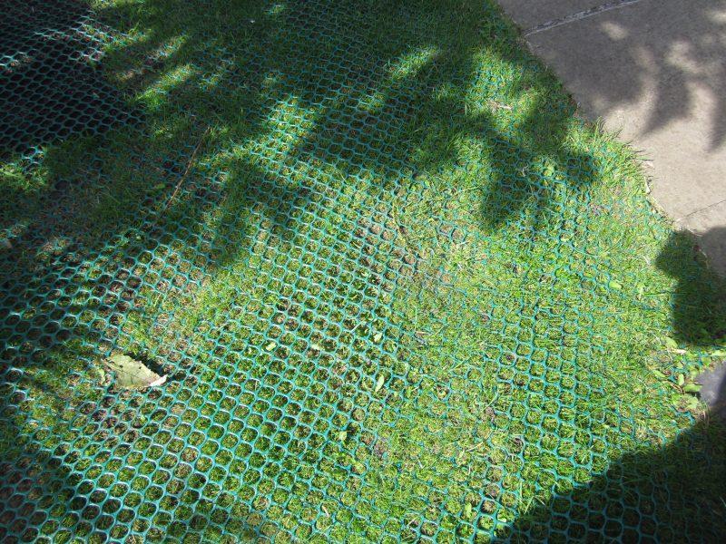 GrassMesh On Backgarden - After