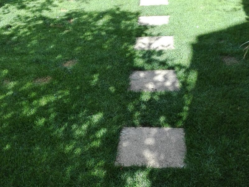 GrassMesh On New Lawn - After
